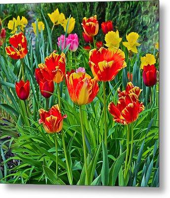 2015 Acewood Tulips 6 Metal Print