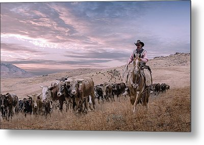 2016 Reno Cattle Drive Metal Print by Rick Mosher