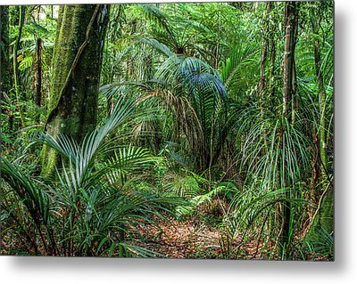 Metal Print featuring the photograph Jungle by Les Cunliffe