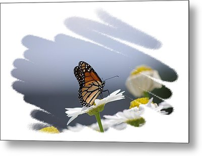 Butterfly Metal Print by Gerald Kloss