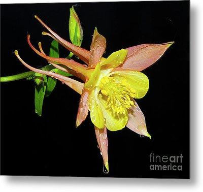 Spring Flower Metal Print by Elvira Ladocki