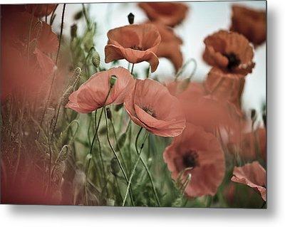 Poppy Meadow Metal Print by Nailia Schwarz
