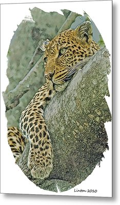 African Leopard Metal Print by Larry Linton