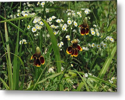 3 Amigos Mexican Hats Metal Print by Robyn Stacey