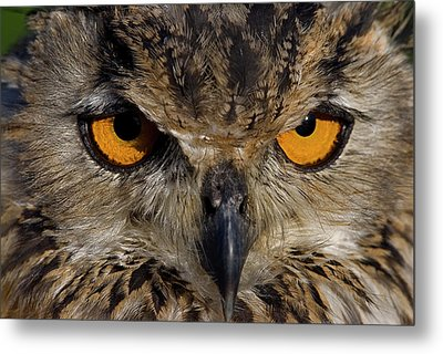 Metal Print featuring the photograph Bengal Eagle Owl by JT Lewis