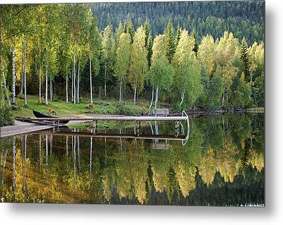 Birches And Reflection Metal Print by Aivar Mikko