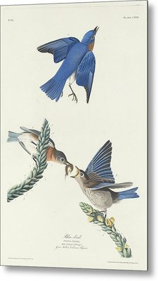 Blue-bird Metal Print