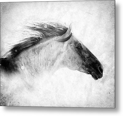 Chase The Wind Metal Print