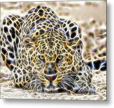 Cheetah Collection Metal Print by Marvin Blaine