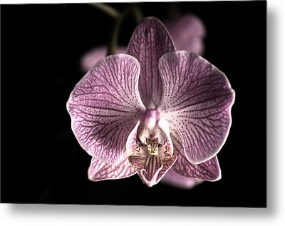 Close Up Shoot Of A Beautiful Orchid Blossom Metal Print by Ulrich Schade