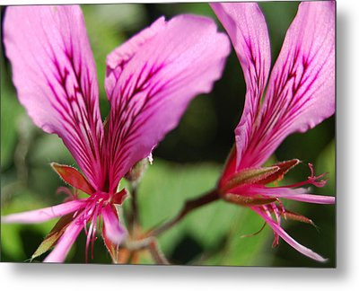 3-d Flowers Metal Print by Jean Booth