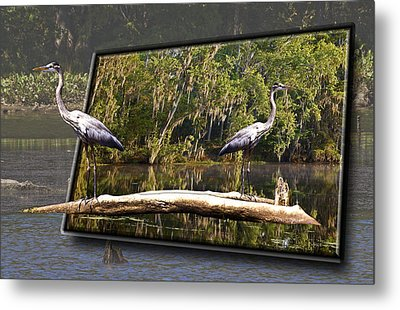 3-d Great Blue Crane Metal Print by Michael Whitaker