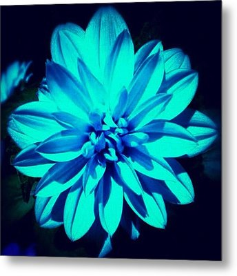 Flower Metal Print by Katie Williams