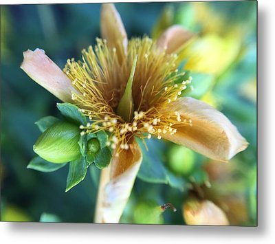 Flower Metal Print by Maxim Tzinman