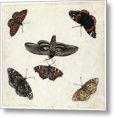 Insects And Garden Pansy Metal Print by MotionAge Designs