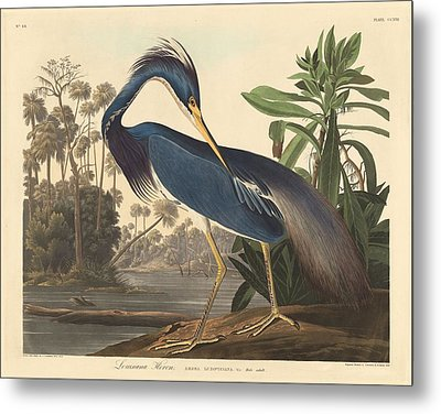 Louisiana Heron Metal Print