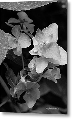 Magnolia Plantation And Gardens Collection Metal Print by DigiArt Diaries by Vicky B Fuller