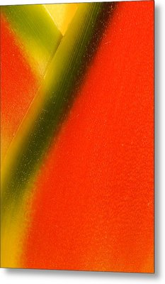 Photograph Of A Lobster Claws Heliconia Metal Print