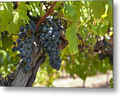 Metal Print featuring the photograph Red Vines by Ulrich Schade