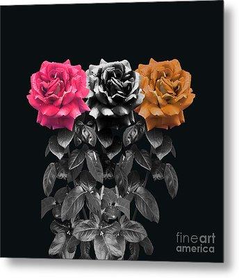 3 Roses Metal Print