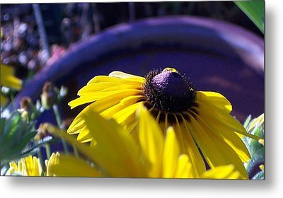 Sun Glory Series Metal Print by Marika Evanson