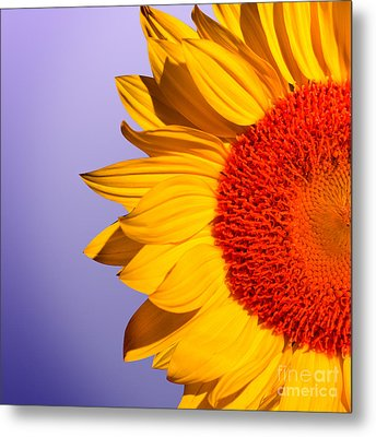 Sunflowers Metal Print by Mark Ashkenazi