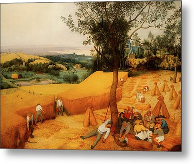 Metal Print featuring the painting The Harvesters by Pieter Bruegel The Elder