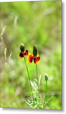 Twins Metal Print by Bill Morgenstern