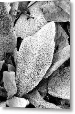 Untitled Metal Print by Kathy Schumann