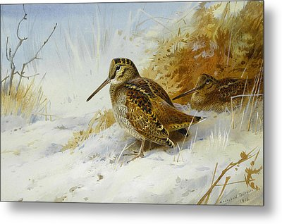 Winter Woodcock Metal Print by Archibald Thorburn