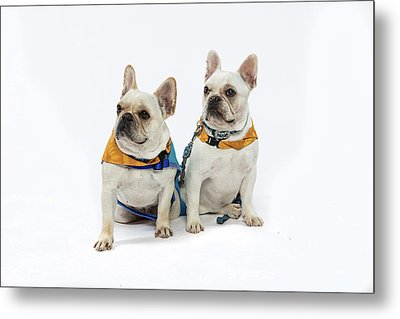 3010.062 Therapet Metal Print by M K  Miller