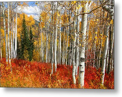 Rocky Mountain Fall Metal Print
