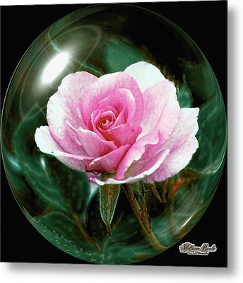 3d Pink Rose Sphere Metal Print by William Havle