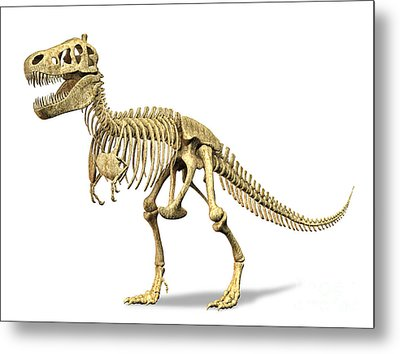 3d Rendering Of A Tyrannosaurus Rex Metal Print by Leonello Calvetti