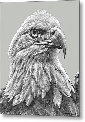 American Bald Eagle Metal Print by Larry Linton