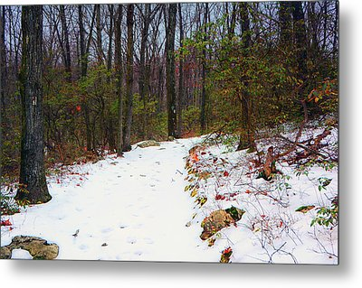 At Harriman State Park Metal Print by Raymond Salani III