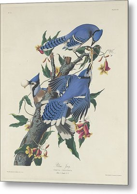 Blue Jay Metal Print by Dreyer Wildlife Print Collections