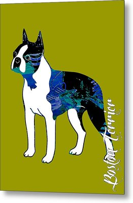 Boston Terrier Collection Metal Print by Marvin Blaine