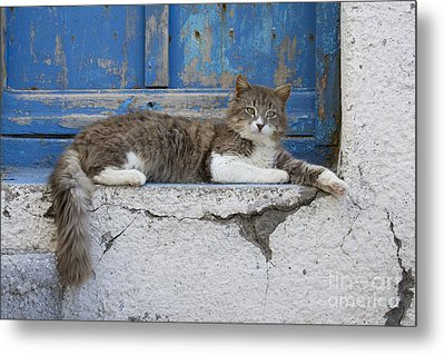 Cat In A Doorway, Greece Metal Print by Jean-Louis Klein & Marie-Luce Hubert