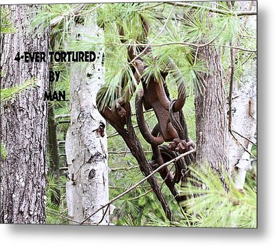 4-ever Tortured By Man Metal Print by Debbie Stahre