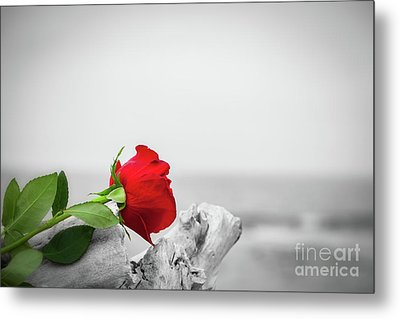 Red Rose On The Beach. Color Against Black And White. Love, Romance, Melancholy Concepts Metal Print by Michal Bednarek