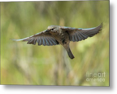 Spread Your Wings Metal Print by Mike Dawson