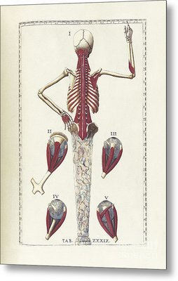 The Science Of Human Anatomy Metal Print by National Library of Medicine