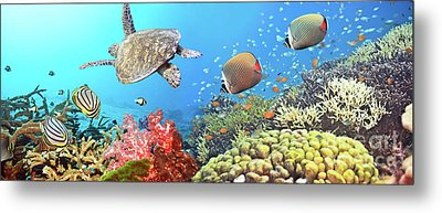 Underwater Panorama Metal Print by MotHaiBaPhoto Prints