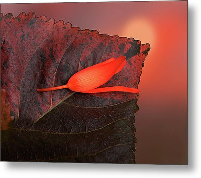 Metal Print featuring the photograph 4366 by Peter Holme III