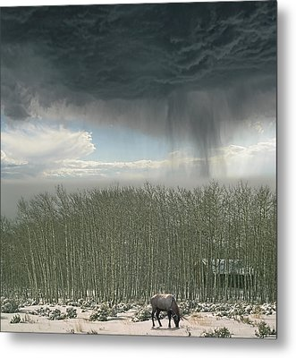 Metal Print featuring the photograph 4375 by Peter Holme III