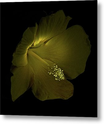 Metal Print featuring the photograph 4460 by Peter Holme III