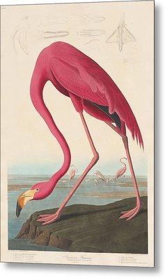 American Flamingo Metal Print by Anton Oreshkin