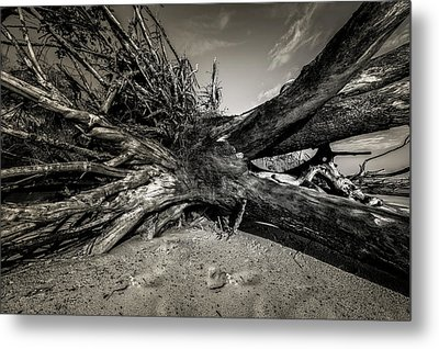 Metal Print featuring the photograph Black Rock Beach by Peter Lakomy