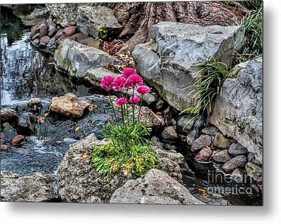 Metal Print featuring the photograph Dallas Arboretum by Diana Mary Sharpton